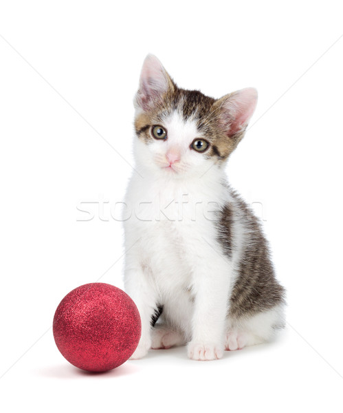 Cute grey and white kittensitting next to a Christmas Ornament o Stock photo © gabes1976