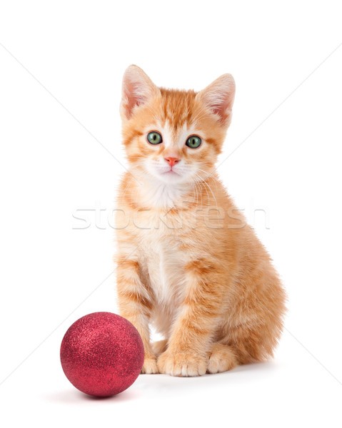 Cute orange kitten with large paws sitting next to a Christmas O Stock photo © gabes1976
