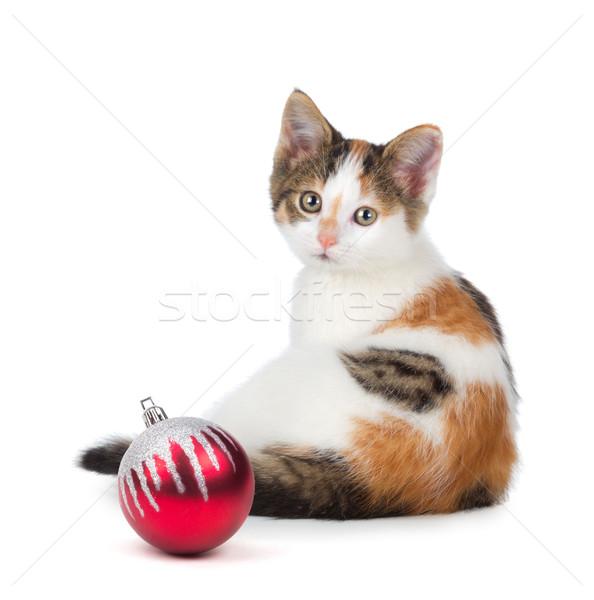 Stockfoto: Cute · kitten · vergadering · christmas · ornament · gelukkig