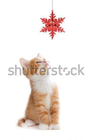 Cute oranje kitten spelen christmas ornament Stockfoto © gabes1976