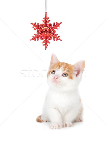 Cute oranje witte kitten spelen christmas Stockfoto © gabes1976