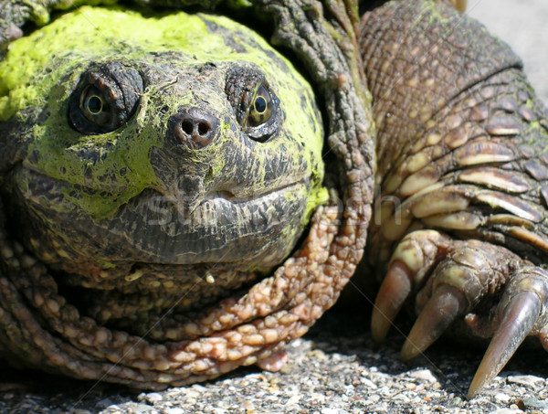 Schildpad gedekt water glimlach Stockfoto © gabes1976