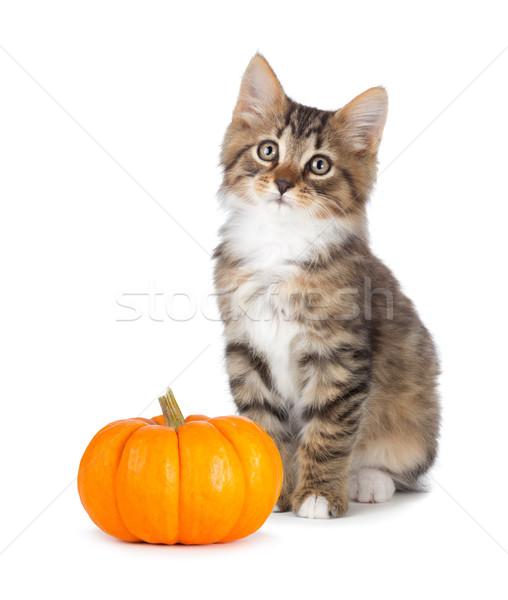 Stock photo: Cute kitten with mini pumpkin on white.