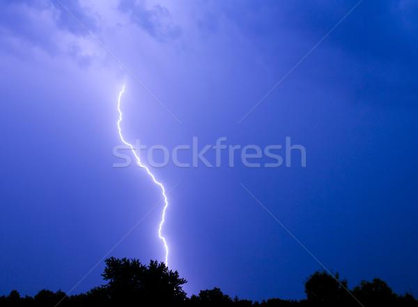 Bliksem staking bout onweersbui boom achtergrond Stockfoto © gabes1976