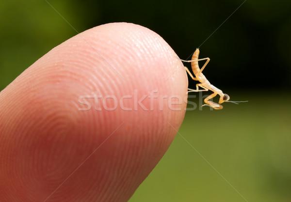 молиться ребенка наконечник пальца Сток-фото © gabes1976