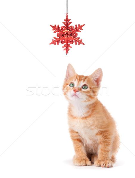 Сток-фото: Cute · оранжевый · котенка · играет · Рождества · орнамент