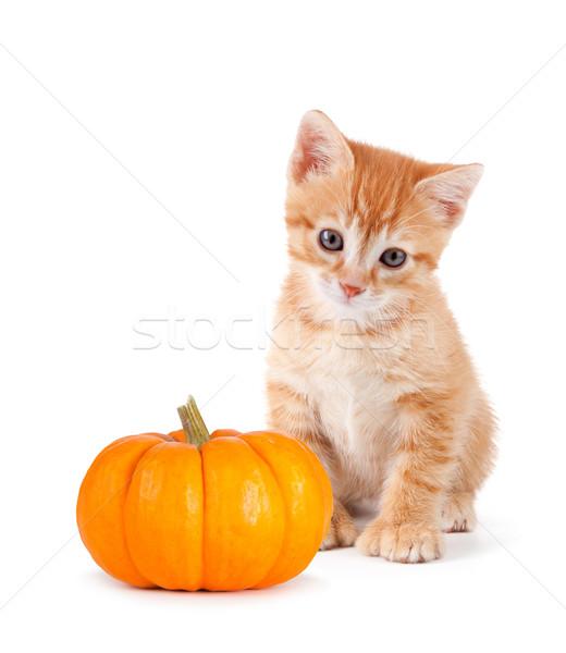 Cute orange kitten with mini pumpkin on white. Stock photo © gabes1976