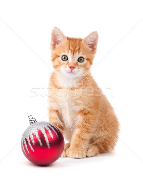 Сток-фото: Cute · оранжевый · котенка · большой · Лапы · сидят