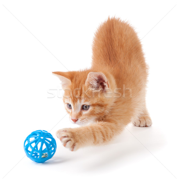 Cute orange kitten with large paws playing with a toy on a white background. Stock photo © gabes1976