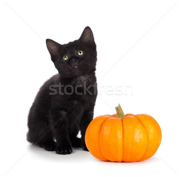 Cute zwarte kitten klein pompoen geïsoleerd Stockfoto © gabes1976