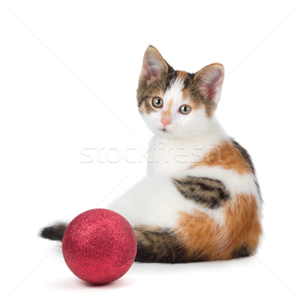 Cute calico kitten sitting next to a Christmas Ornament on a whi Stock photo © gabes1976
