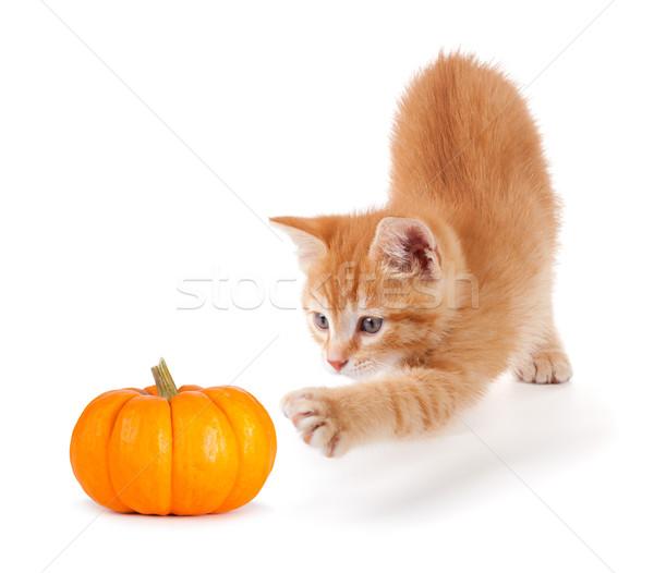 Cute orange kitten playing with a mini pumpkin on white. Stock photo © gabes1976