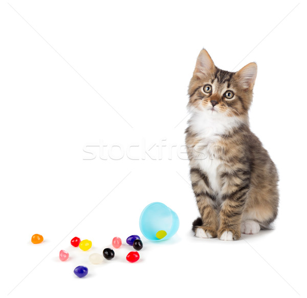 Cute tabby kitten sitting next to spilled jelly beans on a white Stock photo © gabes1976