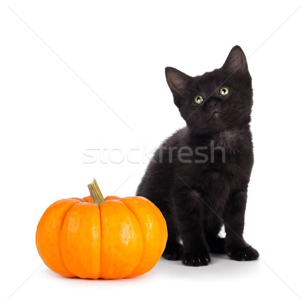 Cute black kitten next to a mini pumpkin isolated on white Stock photo © gabes1976