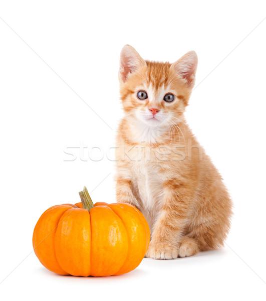 Cute oranje kitten klein pompoen witte Stockfoto © gabes1976
