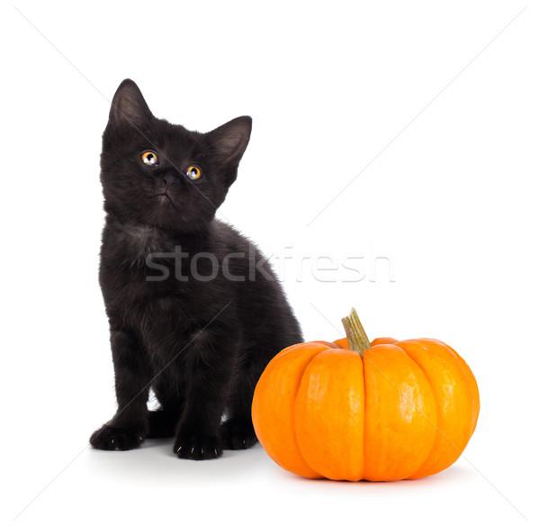 Photo stock: Cute · noir · chaton · mini · citrouille · isolé