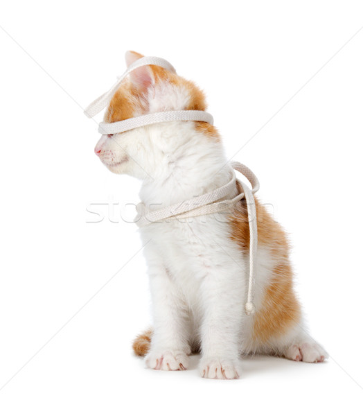 Cute orange and white kitten playing on a white background. Stock photo © gabes1976