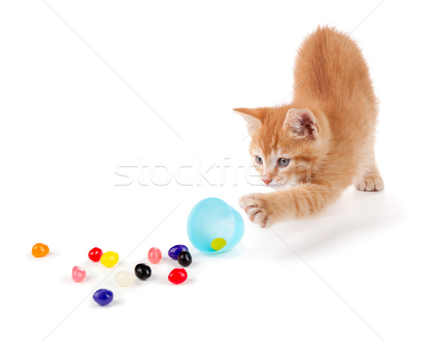 Cute Orange Kitten spilling jelly beans out of a plastic Easter  Stock photo © gabes1976