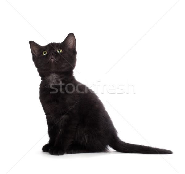 Cute zwarte kitten geïsoleerd witte scary Stockfoto © gabes1976
