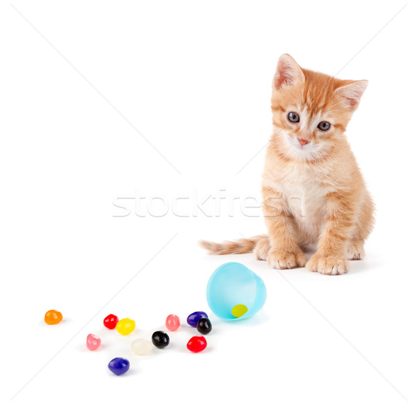 Cute orange kitten with large paws sitting next to spilled jelly Stock photo © gabes1976