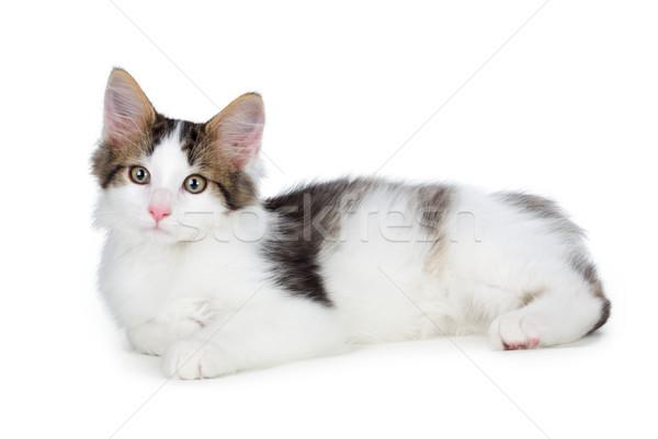 Cute kitten witte geïsoleerd ogen kat Stockfoto © gabes1976