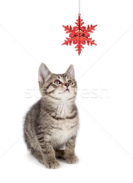 Cute gestreept kitten spelen christmas ornament Stockfoto © gabes1976
