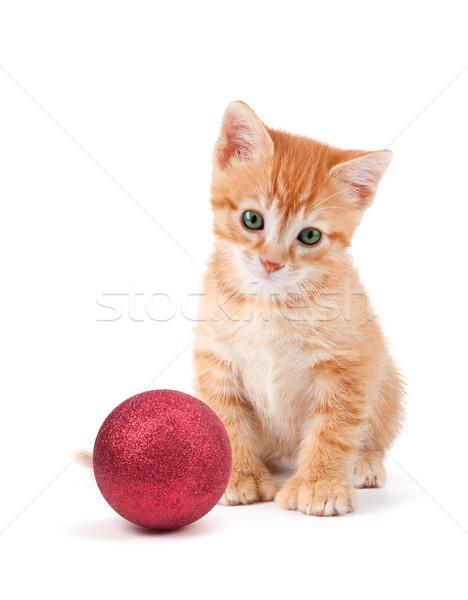 Cute oranje kitten groot vergadering Stockfoto © gabes1976