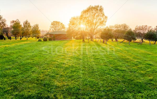 Foto d'archivio: Bella · tramonto · albero · prato · cielo · erba