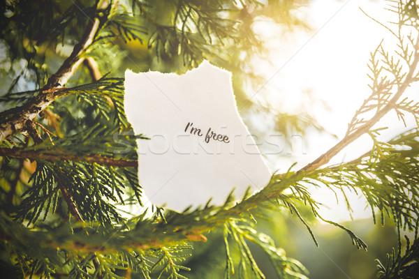 Gratis tekst pijnboom vintage kleuren boom Stockfoto © gabor_galovtsik