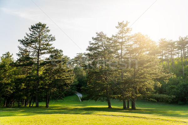 Belle automne paysage bois forêt nature Photo stock © gabor_galovtsik