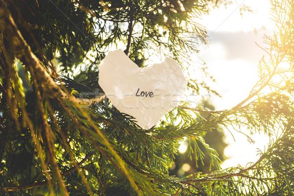 Liefde tekst pijnboom vintage kleuren boom Stockfoto © gabor_galovtsik