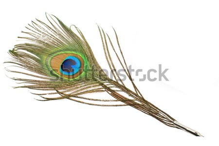 Peacock feather quill and inkwell Stock photo © gavran333