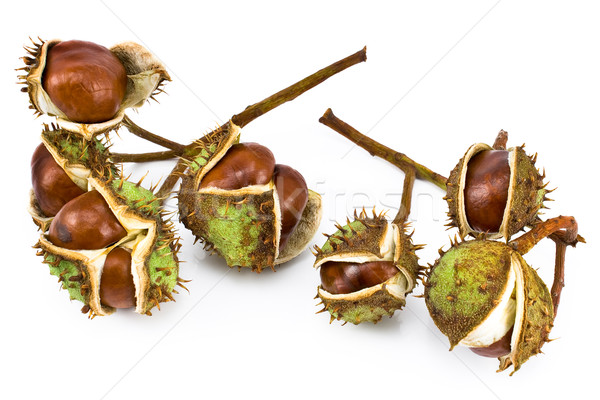 Chestnut berries Stock photo © gavran333