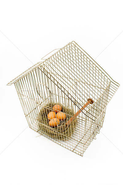 Eggs in Nest confined in Bird Cage Stock photo © gavran333