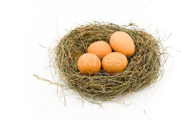 Eggs in Nest Stock photo © gavran333