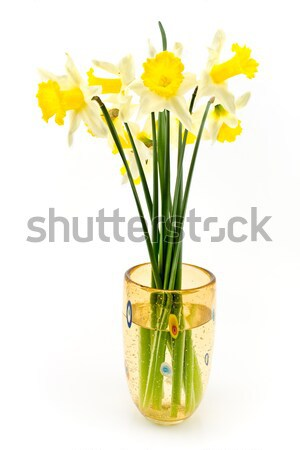 Amarelo narcisos grande vidro vaso isolado Foto stock © gavran333