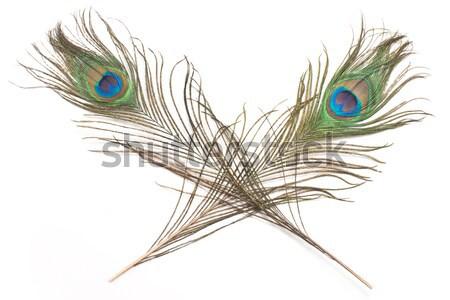 孔雀 羽毛 孤立した 白 ペン 背景 ストックフォト © gavran333