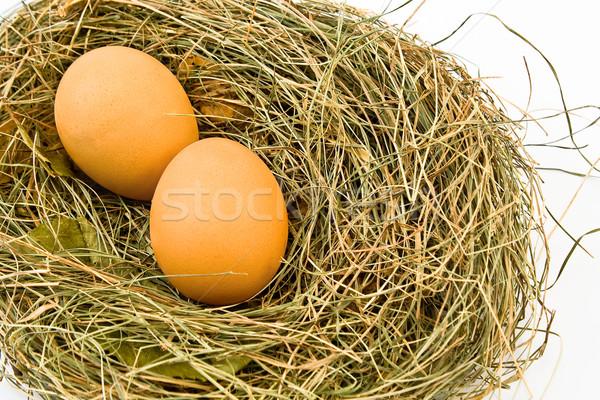Eieren nest geïsoleerd witte voedsel natuur Stockfoto © gavran333