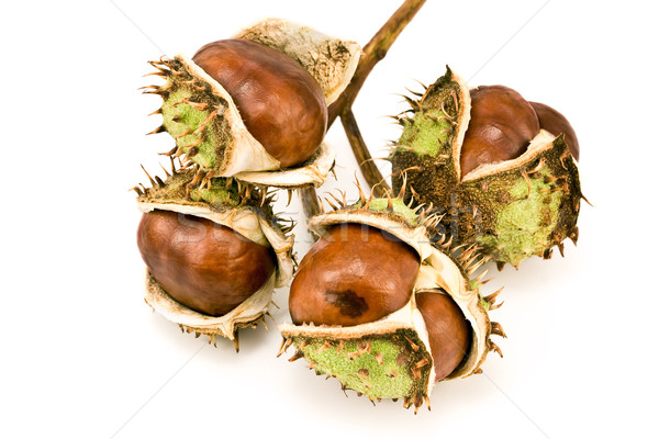 Chestnut berries Stock photo © gavran333