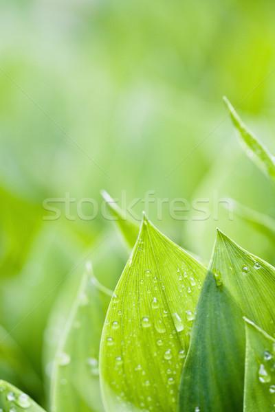 Fraîches vert accent printemps jardin Photo stock © Gbuglok