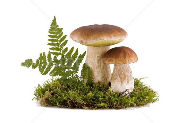 Deux champignons fraîches vert mousse isolé Photo stock © Gbuglok