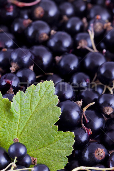 Black currants background Stock photo © Gbuglok