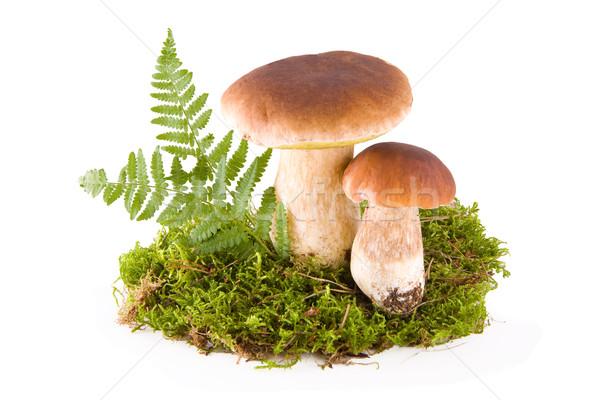 Grzyby mech dwa świeże zielone odizolowany Zdjęcia stock © Gbuglok
