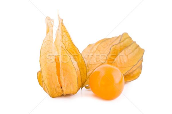 Vruchten witte vers geïsoleerd oranje plant Stockfoto © Gbuglok