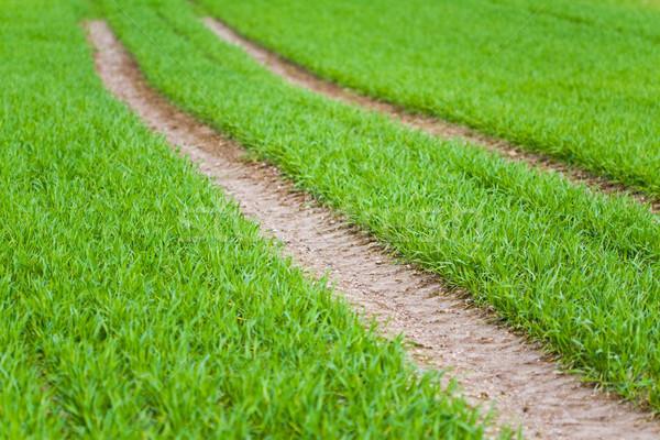 トラクター ホイール フィールド 小さな 緑 ストックフォト © Gbuglok