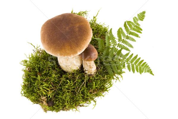 Twee paddestoel champignons vers groene mos Stockfoto © Gbuglok
