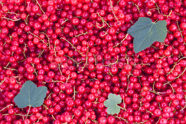 Red currants Stock photo © Gbuglok
