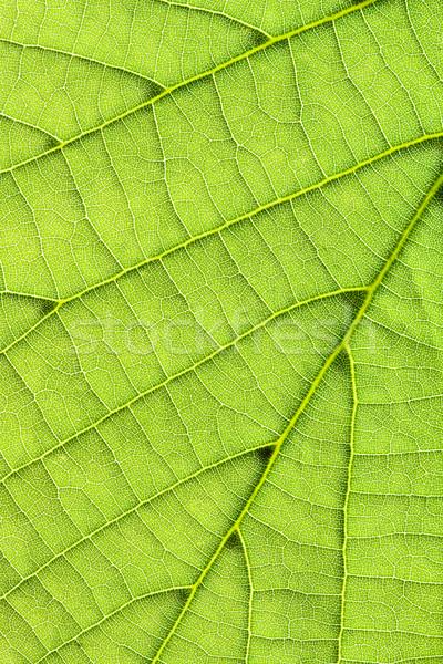 Leaf background vertical Stock photo © Gbuglok
