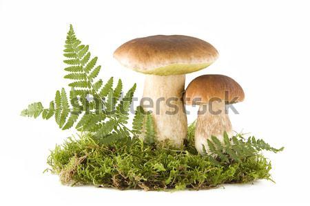 Twee vers champignons groene mos geïsoleerd Stockfoto © Gbuglok