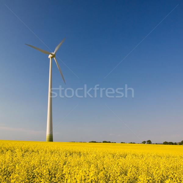Een windmolen veld Geel verkrachting vierkante Stockfoto © Gbuglok